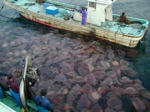 Y.Taniguchi, Niu Fisheries Cooperative
